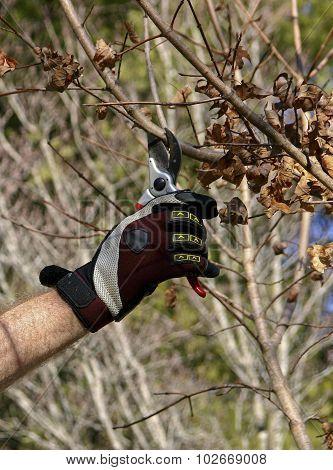 Fall Tree Pruning