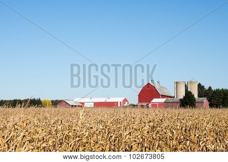 Family Farm Scene In The Fall