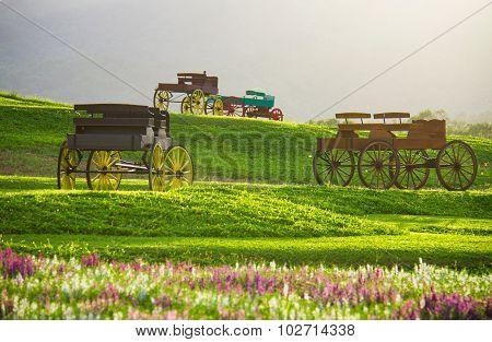 Beautiful landscape Historic carriage in flower field