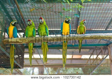 Row of beautiful macaw parrot sitting on log