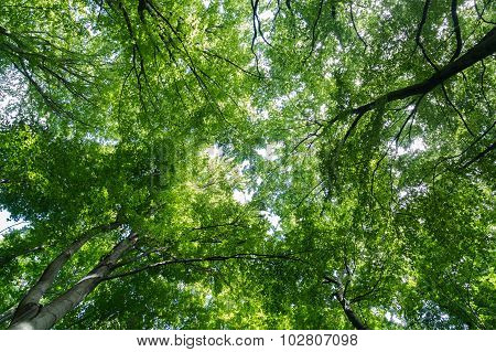 Vibrant Tree Canopy In A Forest