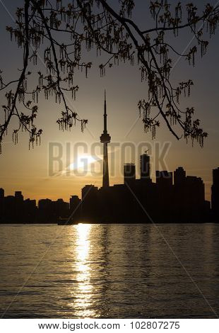 Downtown Toronto And Foilage