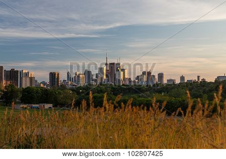 Toronto Downtown Skyline And Plant Foilage