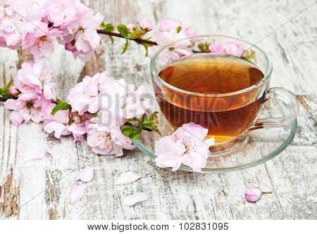 Cup Of Tea And Sakura Blossom