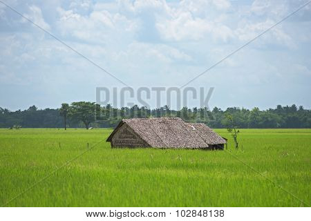 Farm House Among Rice Fields In Myanmar