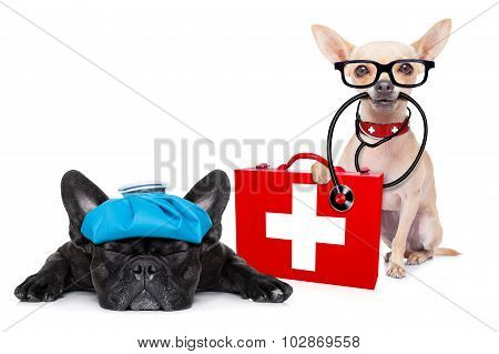 chihuahua dog as a medical veterinary doctor with stethoscope and first aid kit and a sick ill dog isolated on white background poster