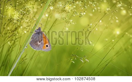 Butterfly On Green Grass Panoramic View