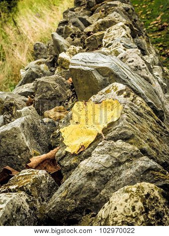 Autumn Leaf on Top of Jagged Stone Wall