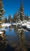 early winter in uinta mountains - northern utah poster