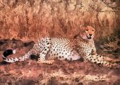 Cheetah resting under tree (Kruger National Park - South Africa) poster