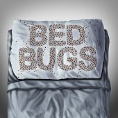 Bed bug on pillow and in bed as a bedbug infestation concept shaped as text letters as parasitic insect pests under the sheets as a hygiene health care symbol and metaphor of parasite bite danger inside a mattress. poster