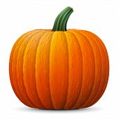 Winter squash isolated on white background. Qualitative vector illustration for agriculture vegetables cooking halloween gastronomy thanksgiving olericulture etc. It has transparency blending modes gradients poster