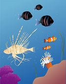 vector based illustration of tropical fish including a lionfish poster