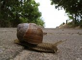 closeup of a snail on concrete background poster