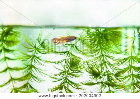 Tropical fish swimming in lighted aquarium or fish tank. Aquascaping of the beautiful planted tropical freshwater aquarium Tropical colorful fishes swimming in aquarium with green plants