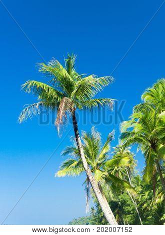 Beautiful Beach Green Getaway