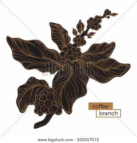 Black branch of coffee tree with leaves and natural coffee beans. Golden hatching. Organic product. Silhouette shape. Botanical illustration. Vector isolated on white background eps.10