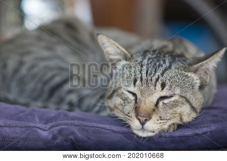 sleeping Siamese cat on a chair under the sun