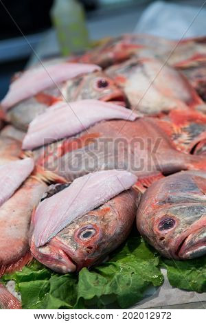 Fresh Whole Red Snapper in Fish Market
