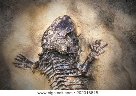 Skeleton of ancient extinct animal. Fossil of some reptile found by scientist in nature
