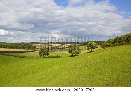 a traditional english country landscape with meadows woodland and livestock under a blue summer cloudy sky in the yorkshire wolds