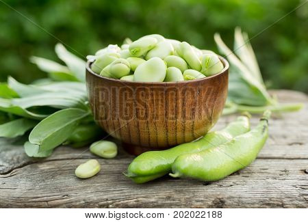Broad beans or fava beans in a bowl. Organic diet and vegan food Selective focus