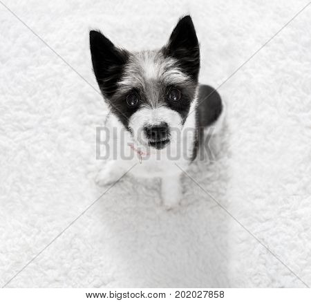 Close Up Curious Dog View