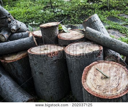 timber log forest industry wood logging lumber material cut