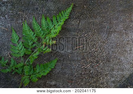 Fern On A Stump With A Beautiful Tree Texture In The Forest