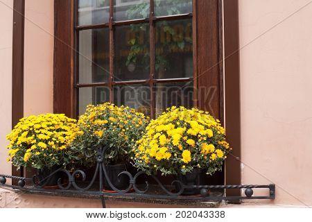 window and flowerbox in ukraine at summer