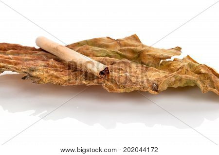Dry tobacco leaf with Cigarette isolated on white background.