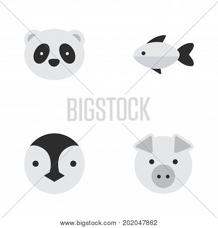 Elements Bear, Piggy, Flightless Bird And Other Synonyms Fish, Flightless And Pig.  Vector Illustration Set Of Simple Fauna Icons.