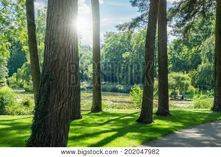 Public park in the city. Backlit picture with trees and a lake. Luisenhain, Bamberg