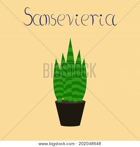 flat illustration on stylish background plant Sansevieria