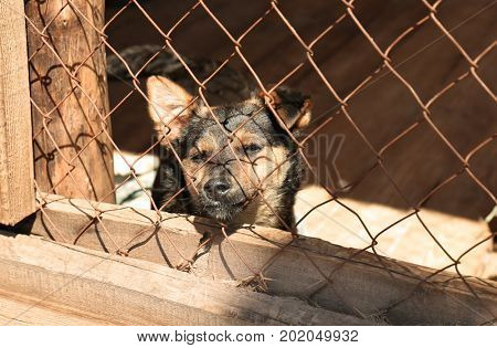 Homeless dog in animal shelter