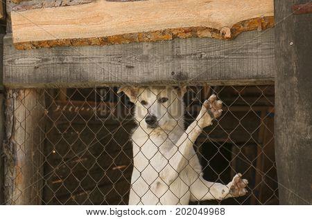 White homeless dog in animal shelter