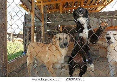 Homeless dogs in shelter cage
