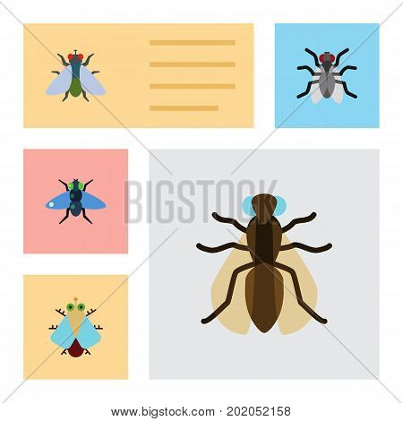 Flat Icon Housefly Set Of Gnat, Fly, Mosquito And Other Vector Objects