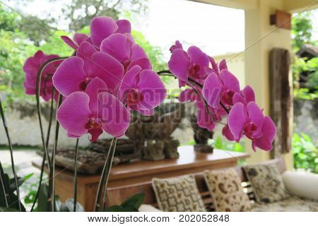 Orchids in Asian hotel lobby in Bali, Indonesia, close up of orchids