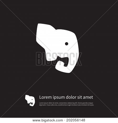 Elephant Vector Element Can Be Used For Elephant, Trunked, Proboscis Design Concept.  Isolated Proboscis Icon.