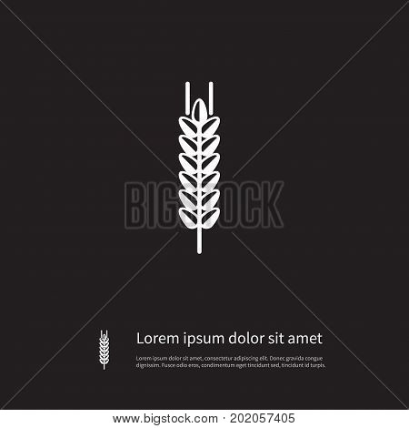 Sheaf Vector Element Can Be Used For Barley, Spike, Sheaf Design Concept.  Isolated Spike Icon.