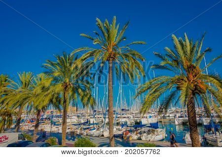 PALMA DE MALLORCA, SPAIN - AUGUST 18 2017: Beautiful harbor view with white yachts and some palm trees, in Palma de Mallorca, Balearic islands, Spain.