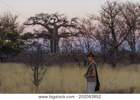 Tourist walking in the bush and Acacia grove at sunset Bushmandland Namibia. Adventure and exploration in Africa. Toned image.