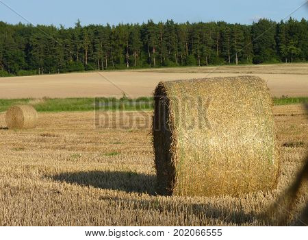 Hay Straw Bales On The Field, Blue Sky And Forest Background