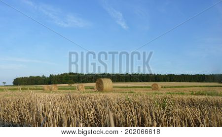 Hay Straw Bales On The Stubble Field,  Blue Sky And Forest Background
