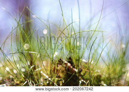Natural plants in outdoor ambience as background