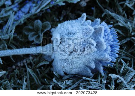 Close-up of a frozen thistle on the grave stone of the Fraser clan at Culloden Moor, Scotland.