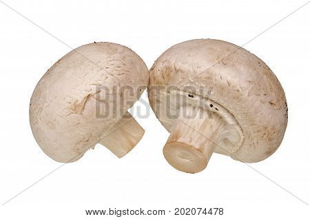 Champignon  Mushrooms Vegetables On A White Background