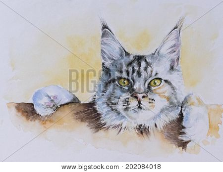 Maine Coon portrait. Picture created with watercolors.