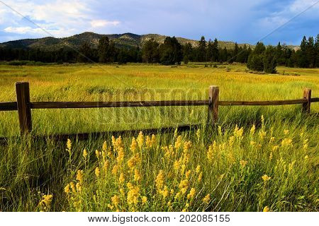 Rustic wooden fence surrounding a lush rural field with spring wildflowers and a pine forest taken near Big Bear, CA